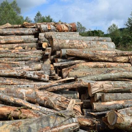 札幌・北海道で木の伐採
