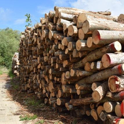処分に困っている庭木や大木